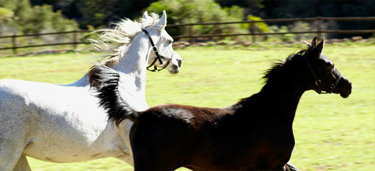 Swellendam Horseback Riding